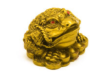 Golden frog (with clipping path) Stock Photography