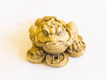 Golden frog with coins Royalty Free Stock Photo