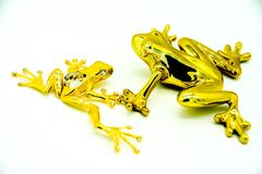 Golden frog two shapes stock images