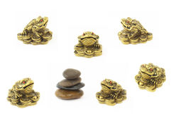 Golden frogs over white Royalty Free Stock Photography