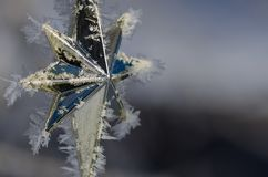 Golden Frost Covered Christmas Star Decorating an Outdoor Tree Stock Photos