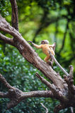 Golden fure baby dusky leaf monkey Stock Photo