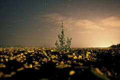 The golden Garden. A little tree makes the difference royalty free stock photos