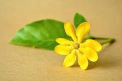 Golden gardenia flower Stock Images