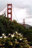 The Golden Gate bridge. With white flowers in the foreground Royalty Free Stock Images