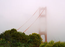 Golden Gate Bridge A. Golden Gate Bridge peeking through thick fog with green sunlit trees in the foreground Stock Images