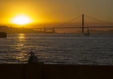 Golden gate bridge al tramonto ed al gabbiano Fotografie Stock Libere da Diritti