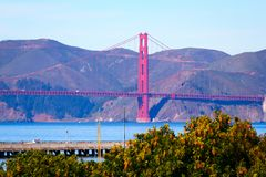 The Golden Gate Bridge and beautiful blossom trees. Blue sky in San Francisco, California royalty free stock photography