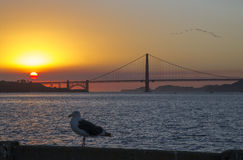 Golden gate bridge in California ed in gabbiano Fotografia Stock Libera da Diritti