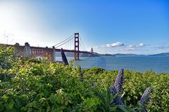 Golden gate bridge e BAIA di UFS Immagine Stock