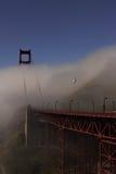 Golden gate bridge e gaivota imagens de stock royalty free