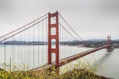 Golden Gate Bridge i wildflowers Zdjęcia Stock