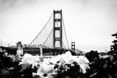 Golden gate bridge nell'inverno Fotografie Stock