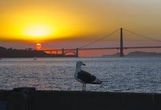 Golden gate bridge no por do sol e na gaivota Fotos de Stock