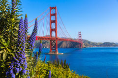 Golden Gate Bridge San Francisco purple flowers California. Golden Gate Bridge San Francisco purple flowers Echium candicans in California royalty free stock photography