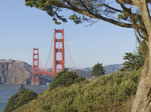 Golden Gate Bridge, Tree-Framed Royalty Free Stock Photography