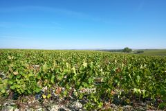 Golden Gate of Burgundy, village of Chablis in Bourgogne region, famous for white wine. Chablis,France-October 16, 2018: Golden Gate of Burgundy, village of royalty free stock photos
