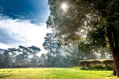 Golden Gate Park, San Francisco, California Stock Photos