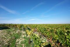 Golden Gate van Bourgondië, dorp van Chablis in Bourgogne-gebied, beroemd voor witte wijn stock fotografie