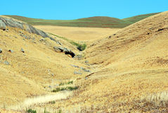 Golden Gatenationalpark, Sydafrika Arkivbild