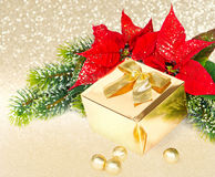 Golden gift and red christmas flower poinsettia Stock Photo