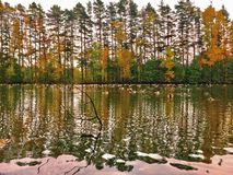 Golden Glory of Autumn Royalty Free Stock Images