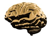 Golden glossy brain isolated on a white background. 3D illustration.  stock photos