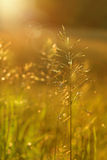 Golden glow. In the early evening Royalty Free Stock Photography