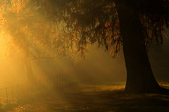 Golden glow over tree in the Autumn Stock Image