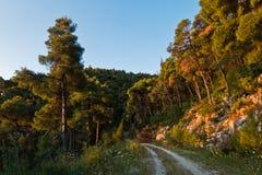 Golden glow of pine tree forest alongside island backroad at sunset, Skopelos island. Greece stock photo