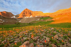 Golden glow in the Wasatch Mountains. Stock Image
