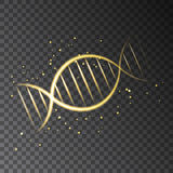 Golden  glowing  DNA sequence isolated on transparent background. Golden  glowing  DNA sequence. Vector shining gold light effect  for organic cosmetic and Stock Photography