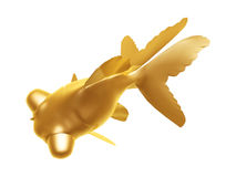 Golden goldfish Stock Image