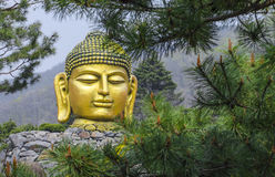 Golden Graet Buddha, Korea Stock Photos