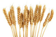 Golden Grain Stock Photos