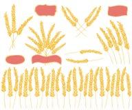 Golden grain design elements Royalty Free Stock Photo
