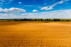 Golden grain field landscape. Blue sky above farmland stock images