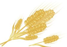 Golden grain Stock Photography