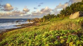 Golden granite rocks on the seychelles 1 Royalty Free Stock Image