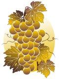 Golden grape Stock Photos