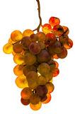 Golden grape - isolated Royalty Free Stock Photography