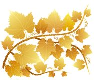 Golden grape leaves Royalty Free Stock Photo