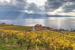 Vineyards and lake Leman 4. Golden grape vines. Beautiful view on the vineyards, Lavaux region, cloudy sky scape, part of Alps and lake Leman on the background royalty free stock photos