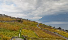 Vineyards and lake Leman 8. Golden grape vines. Beautiful view on the vineyards, Lavaux region, cloudy sky scape, part of Alps and lake Leman on the background stock photo