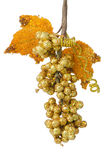 Golden grapes Royalty Free Stock Photos