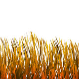 Golden Grass Royalty Free Stock Images