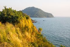 Golden grass on cliffs beaches sunlight day in Thailand. Stock Photography