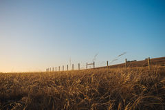 Golden grass and fenceline. A peaceful, tranquil scene as tall golden grass sways in the breeze under a blue sky at Fiscalini Ranch in Cambria, California Royalty Free Stock Photography