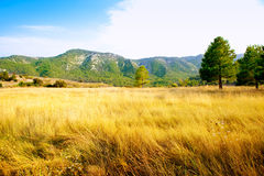 Golden grass field with pine tree mountains Stock Photos