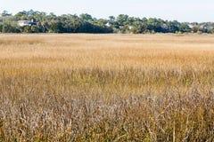 Golden Grass in Salt Water Wetland Marsh. Golden marsh grasses in the wetlands Royalty Free Stock Images